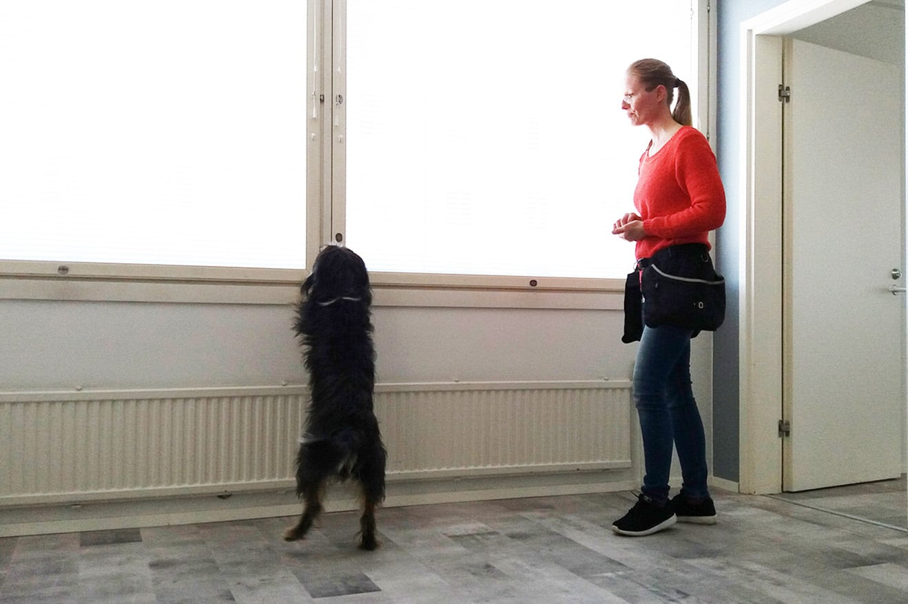 Homekoira löytää ja näyttää ikkunan karmeista tulevat ilmavuodot vaurioituneista rakenteista.