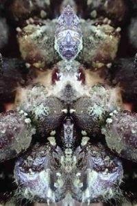 Sädesieni-Aktinobakteeri-Streptomyces.-Homeista-taiteellisia-kuvia-by-Satu-Kekäläinen